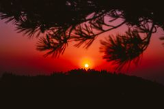 Sunset through pine limbs Royalty Free Stock Photo