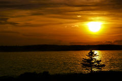 Sunset Pine Tree Royalty Free Stock Image