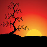 Sunset with Pine Tree. Vector Illustration. Royalty Free Stock Image