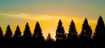 Sunset pine trees Royalty Free Stock Image