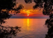 Sunset through pine trees Stock Photo