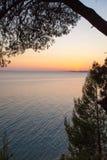 Sunset with Pinetree, Sithonia Stock Photo
