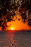 Sunset with Pinetree, Sithonia Royalty Free Stock Photo