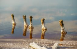 Sunset on a pink salt lake, a former mine for the extraction of pink salt. row of wooden pegs overgrown with salt royalty free stock photos