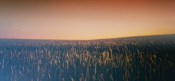 Sunset in the plain. Summer season. Royalty Free Stock Images