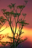 Sunset Plant Royalty Free Stock Photo