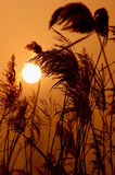 Sunset and plants Royalty Free Stock Photo