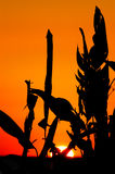 Sunset with plants. In Esteros del Ibera, Argentina touristic place royalty free stock images