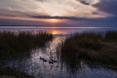 Sunset plot with ducks Stock Image