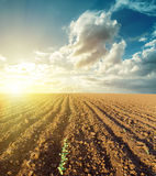 Sunset and plowed field Royalty Free Stock Images