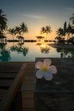 Sunset with plumeria Royalty Free Stock Photo