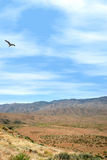 Sunset Point. Bird flying over mountainous terrain at Sunset Point in Arizonia. Shot with Canon 20D Stock Photography