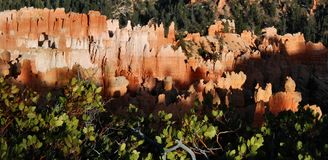 Sunset Point Hoodoos, Bryce Canyon. Image captured in Bryce Canyon National Park at Sunset Point of hoodoos glowing in late afternoon sunlight Stock Images