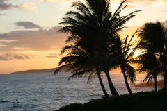 Sunset on Poipu, Kauaii. An amazing sunset, silloutting the palms on Poipu, Kauaii Stock Image