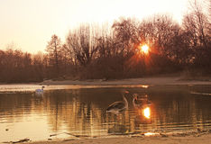 Sunset pond in the park Stock Photos