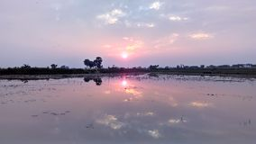 Sunset at a pond. Sunset with some clouds and trees at a pond and reflection on water in rural India Royalty Free Stock Photos