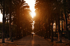 Sunset promenade with palms along it, Spain Stock Images