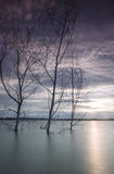 Sunset at Puchong lake. Three dead trees waiting for its time of fall in the ex-mining lake at Puchong, Selangor state of Malaysia. Sunset at the background royalty free stock photo