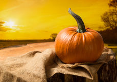 Sunset Pumpkin Stock Image