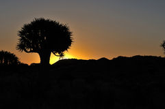 Sunset at the Quiver Tree Forest, Namibia Royalty Free Stock Image