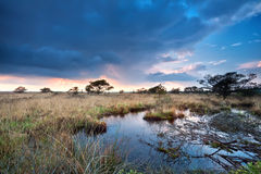 Sunset after rain over swamps Stock Photos