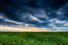 Sunset in rapeseed field Stock Photos