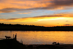 The sunset on the rapti,chitwan,nepal Royalty Free Stock Photography