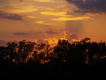 Sunset Rays. Rays from a setting sun behind silhouetted trees Stock Images