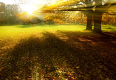 Sunset rays in the garden. Sunset rays in the autumn garden, Swierklaniec, Poland Royalty Free Stock Photos