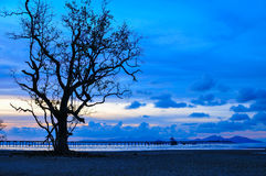 Sunset Red  Blue Sky Twilight  on the beach. Alone Tree and Wood Port  Red  Blue Sky Twilight  on the beach Royalty Free Stock Photography