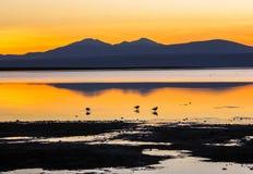 SUNSET AT RED LAGOON, BOLIVIA Royalty Free Stock Image