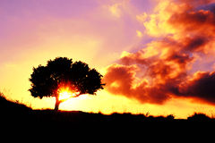 Sunset red and magenta with oak tree Royalty Free Stock Images