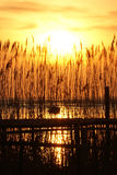 Sunset through reed Royalty Free Stock Image