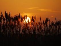 Sunset reed Stock Photo