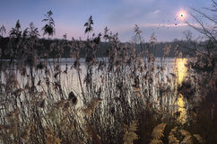 Sunset on the reeds with birds in sky Royalty Free Stock Image