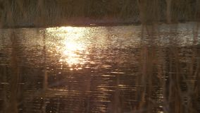 Sunset reflecting on the surface of lake water stock footage