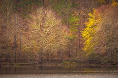 Sunset reflection on the trees in autumn royalty free stock image
