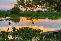 Sunset with Reflection on the Water, Green Plants and Trees and River in Pantanal, Brazil stock images