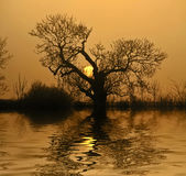 Sunset Reflections. Sun setting behind a tree with a water effect manipulation added Stock Images
