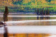 Sunset reflections on boreal forest lake in Yukon Stock Images