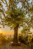 Sunset at regenerated tree Royalty Free Stock Images