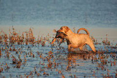 Sunset retrieve Royalty Free Stock Photo