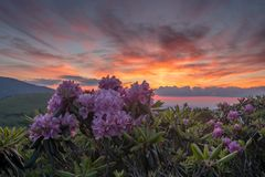 Sunset and Rhododendron Blooms. Along the border of North Carolina and Tennessee Stock Photography