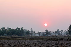 Sunset at the rice farm. Royalty Free Stock Photography