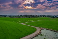 Sunset at rice field in Thailand stock image