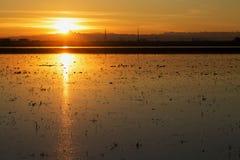 Sunset on rice field Royalty Free Stock Photo