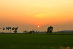 Sunset at rice field. This photo are sunset at rice field in Nakronnayok Thailand Royalty Free Stock Photo