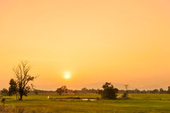 Sunset on Rice Field Royalty Free Stock Photography