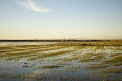 Sunset rice field. Water landscape blue royalty free stock photos