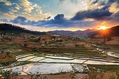 Sunset rice fields Madagascar Stock Photos